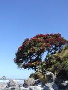 Matarangi Beach
