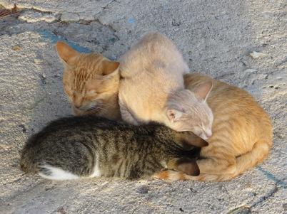 Cats in Cavtat