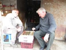 Chess in Shkoder